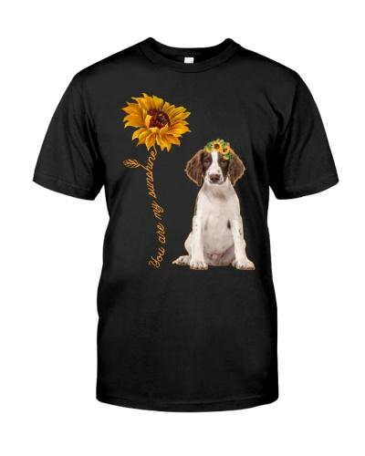 English Springer Spaniel Sunshine