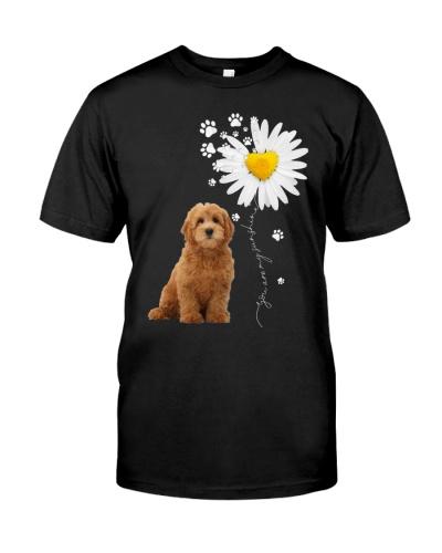 Sunshine - Goldendoodle