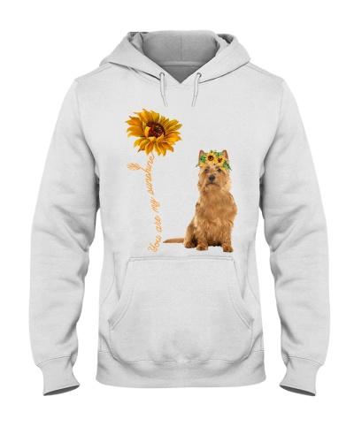 Australian Terrier Sunshine