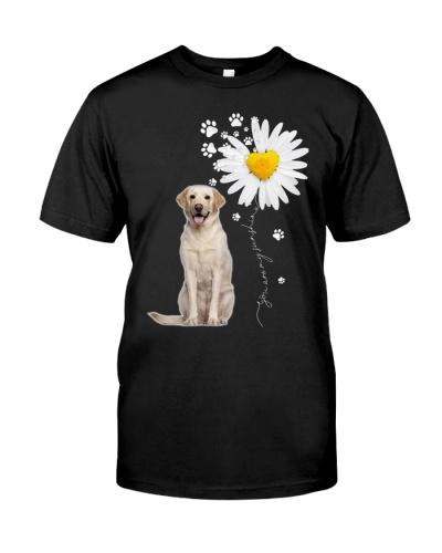 Sunshine - Yellow Labrador