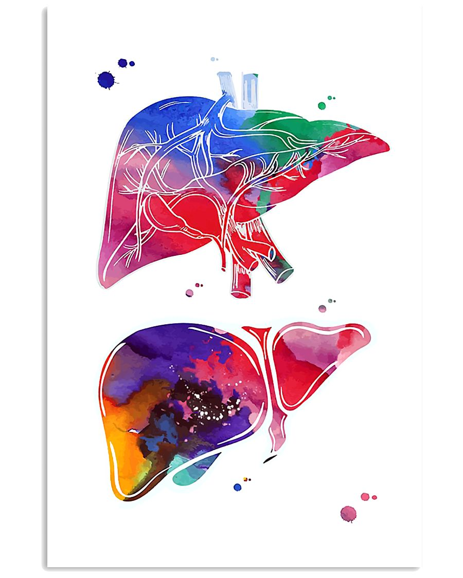 Anatomical Liver 24x36 Poster