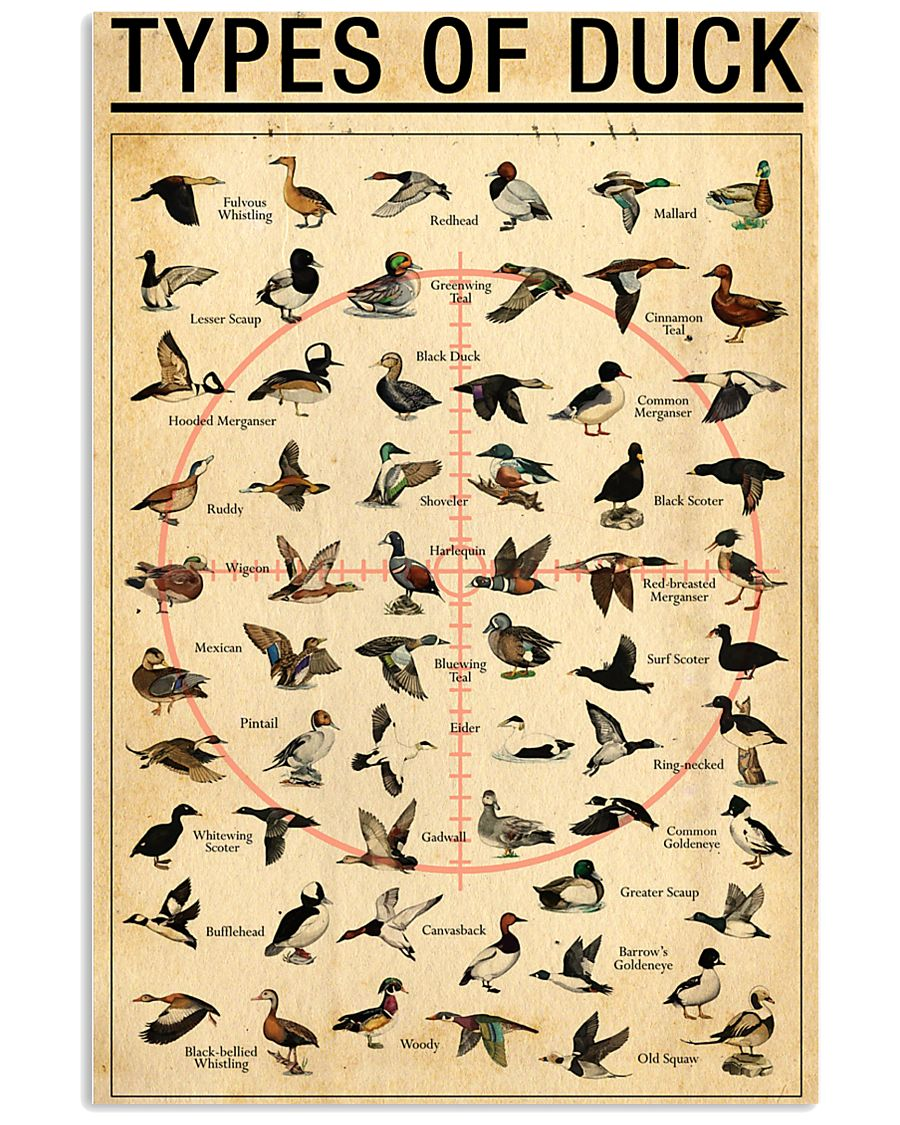 Duck Types Of Duck 11x17 Poster