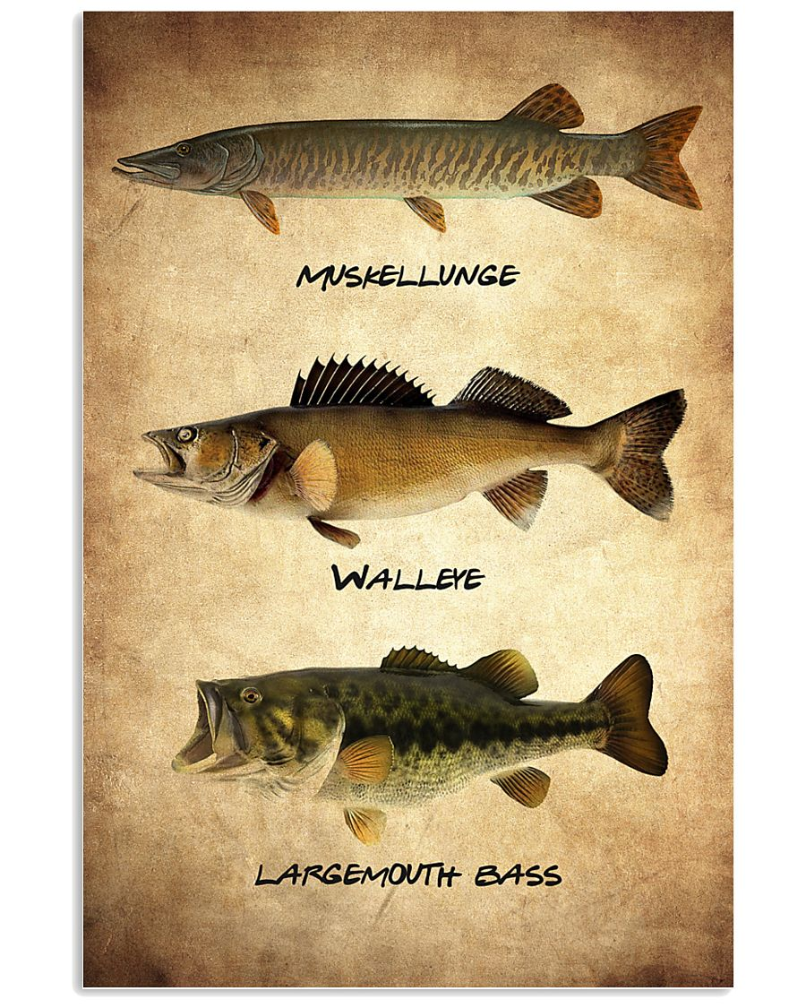 Fish Poster 3 11x17 Poster