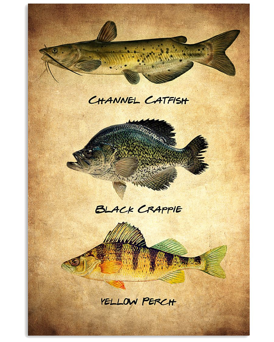 Fish Poster - Discounted Set of 3 11x17 Poster