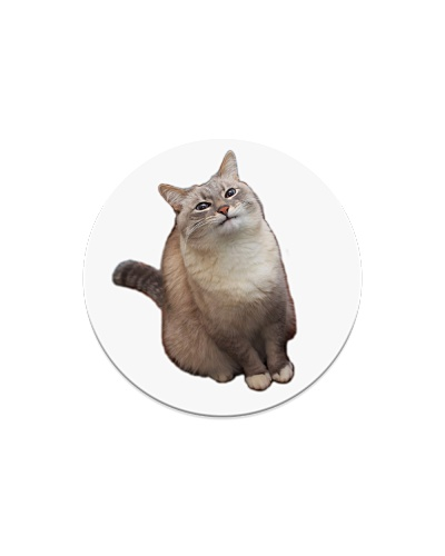 Support Cat