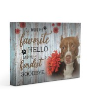 Pit Bull - My favorite hello 14x11 Gallery Wrapped Canvas Prints front
