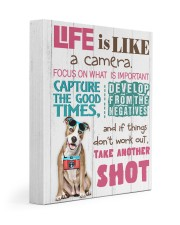 Pit Bull - Life is like a camera 11x14 Gallery Wrapped Canvas Prints front