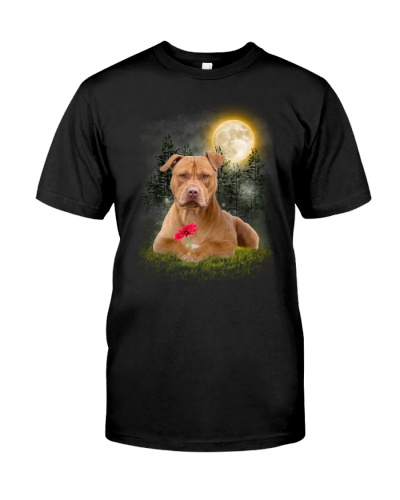 American Pit Bull Terrier Beauty