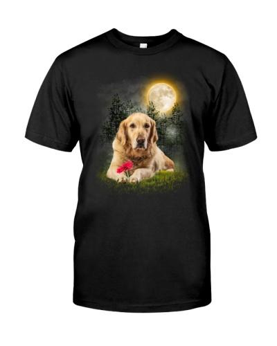 Labrador Retriever Beauty