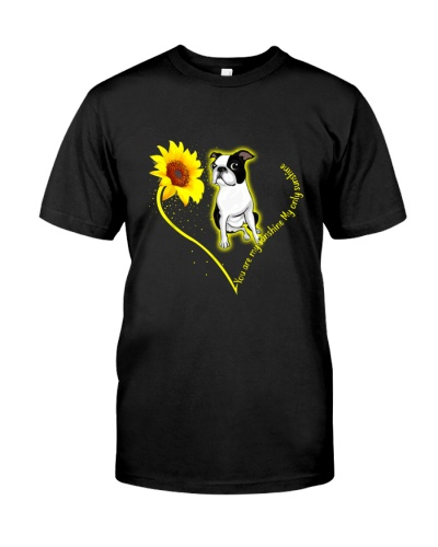 You are my sunshine Boston Terrier