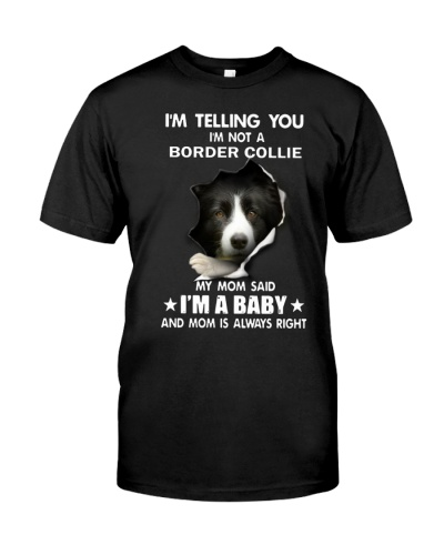 I'm telling you i'm not a border collie