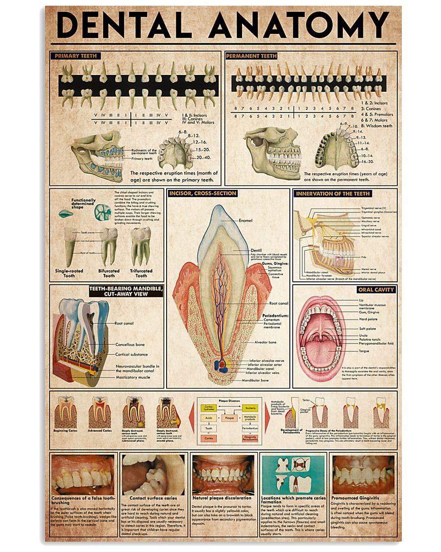 dental anatomy 2 24x36 Poster
