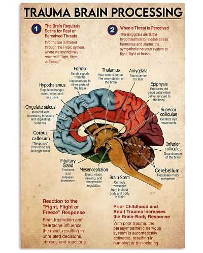 trauma brain process