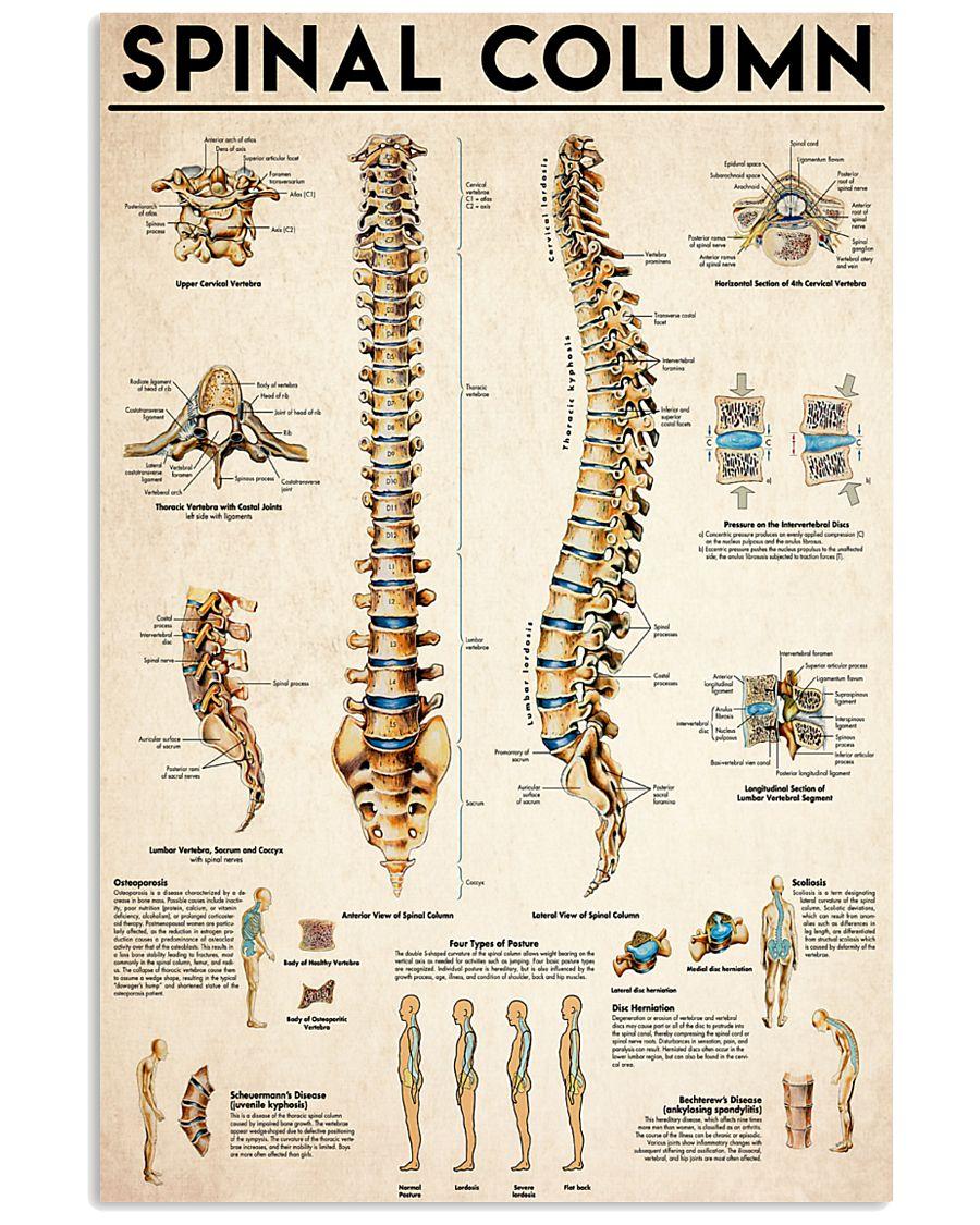 Spinal Column  24x36 Poster