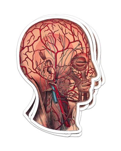 Sticker Head antm 3