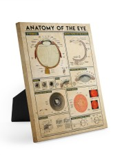 eye-anatomy 8x10 Easel-Back Gallery Wrapped Canvas thumbnail