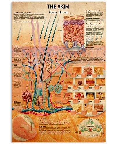 anatomy the skin