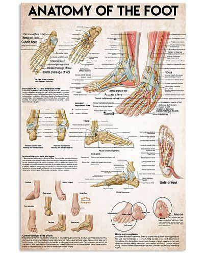 anatomy-foot-II