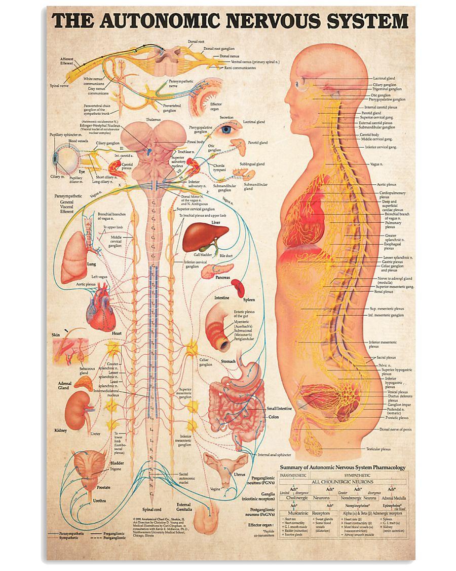 nervous system 24x36 Poster
