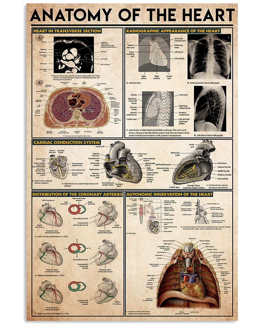 heart-anatomy-knowledge 11x17 Poster