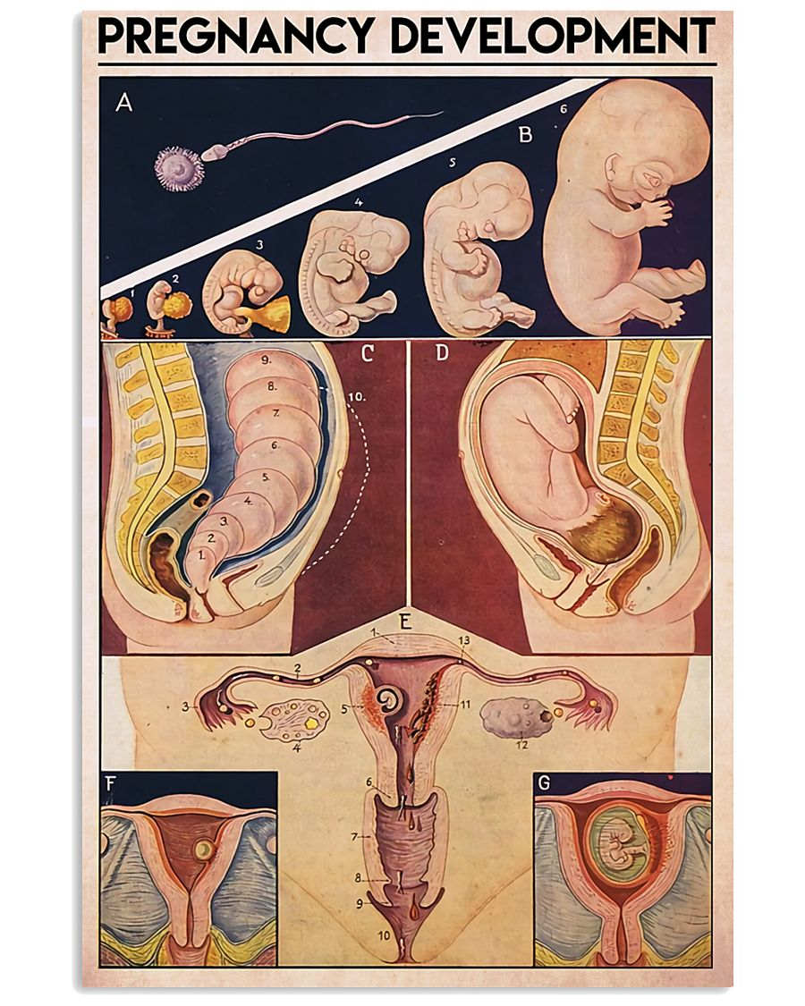 preg dev midwife 11x17 Poster
