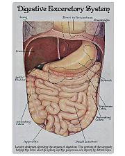 Digestive Exceretory System 24x36 Poster front
