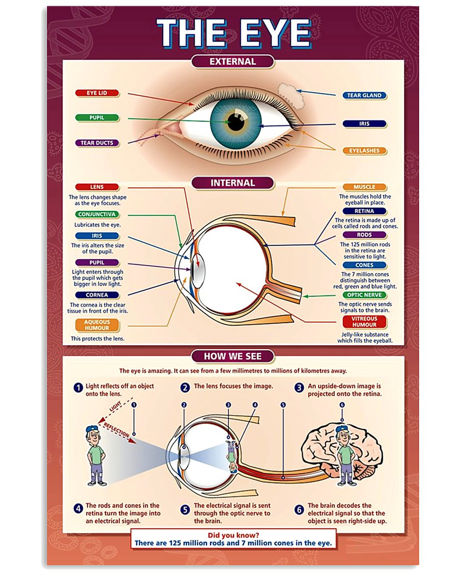 the eye 24x36 Poster