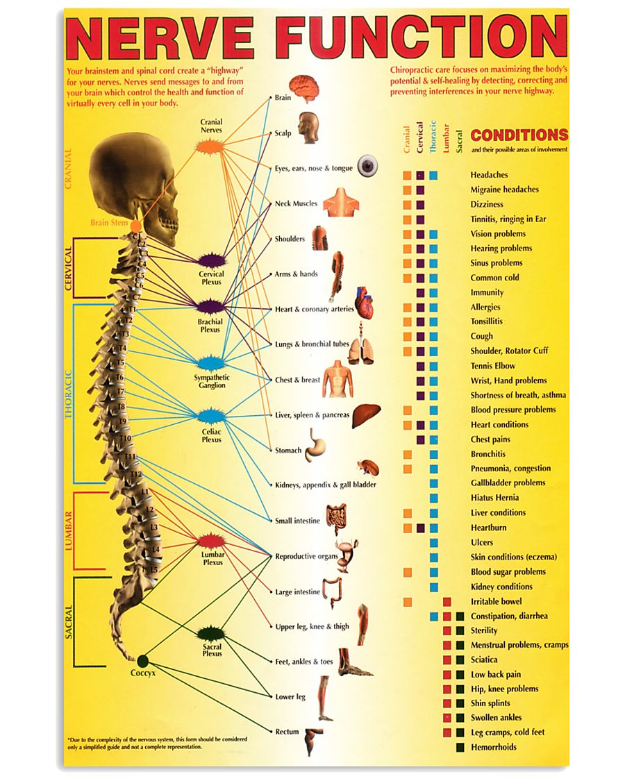 spinal nerves function chart 24x36 Poster