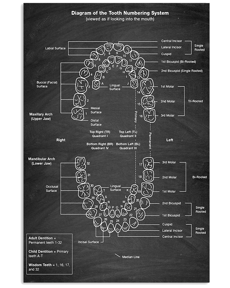 tooth numbering 24x36 Poster