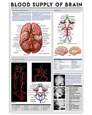 blood supply of brain 11x17 Poster front