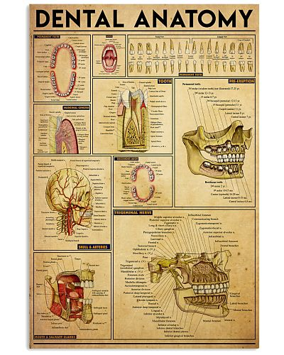 dental-anatomy1