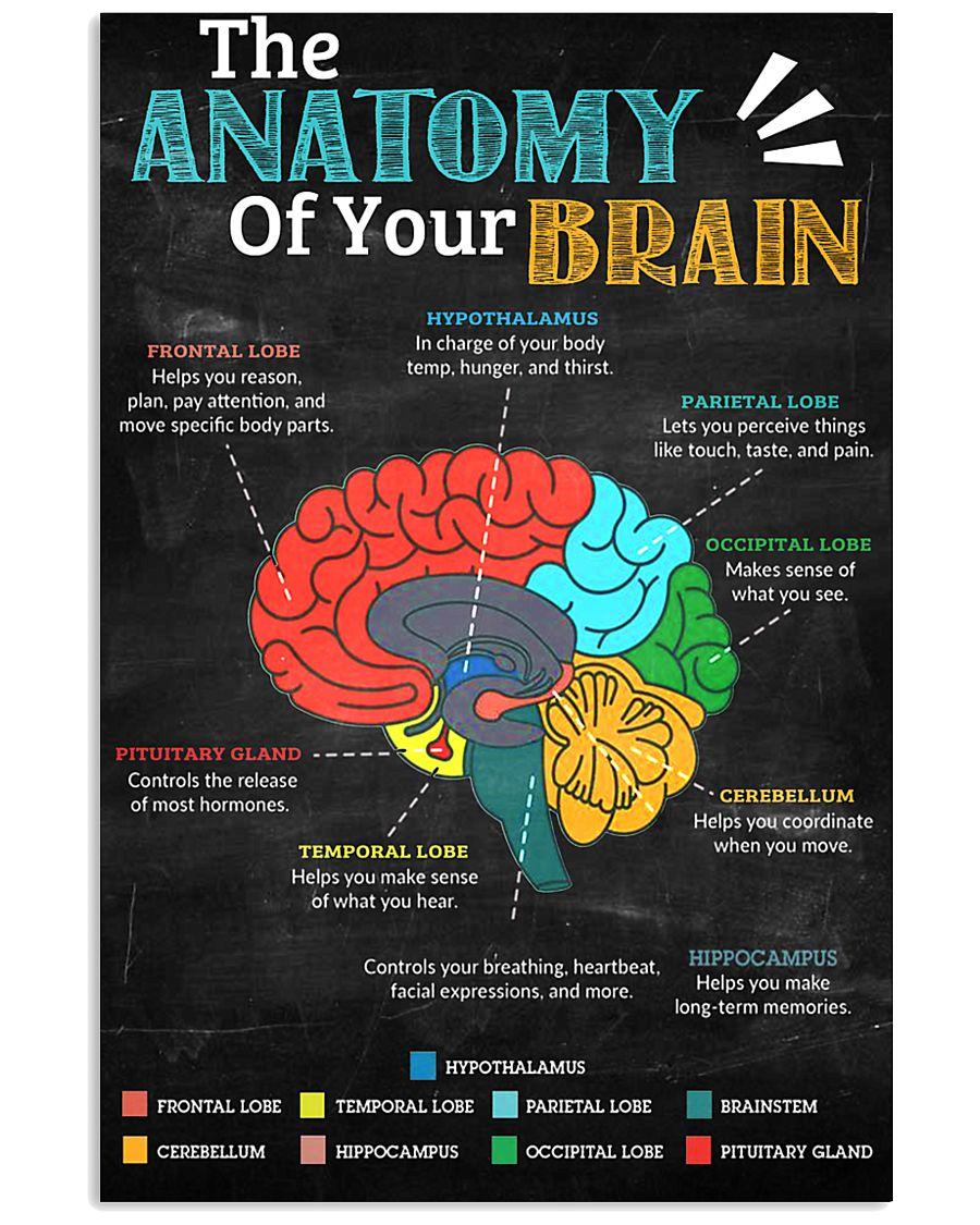 anatomy brain board 11x17 Poster