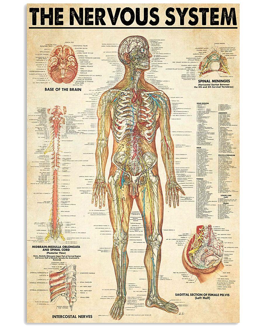 neurologist the nervous system 24x36 Poster