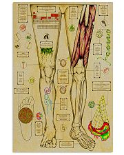 anatomy fact 1 11x17 Poster front