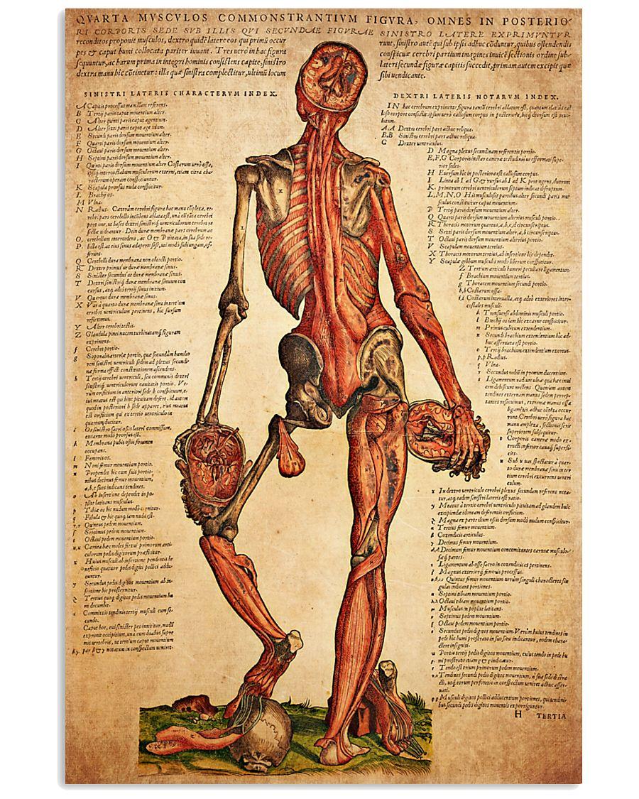 antique anatomy 11x17 Poster