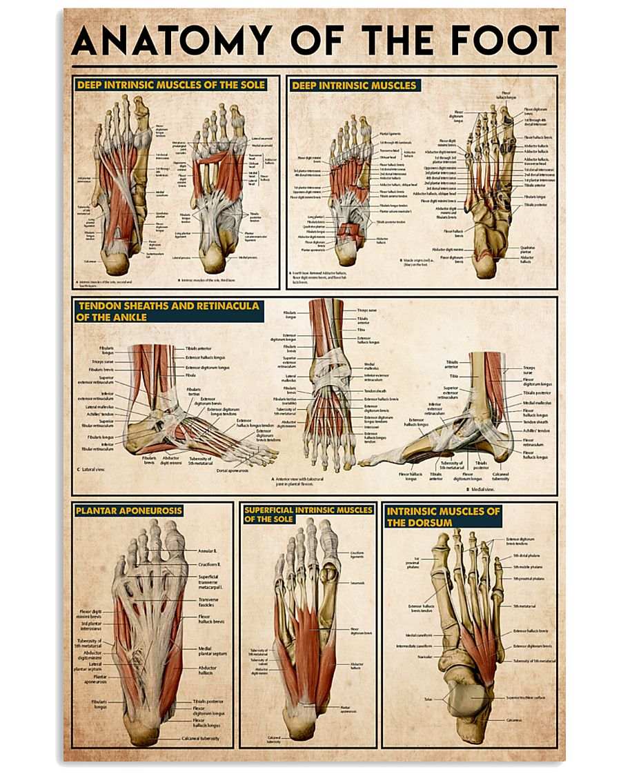 foot-anatomy 24x36 Poster