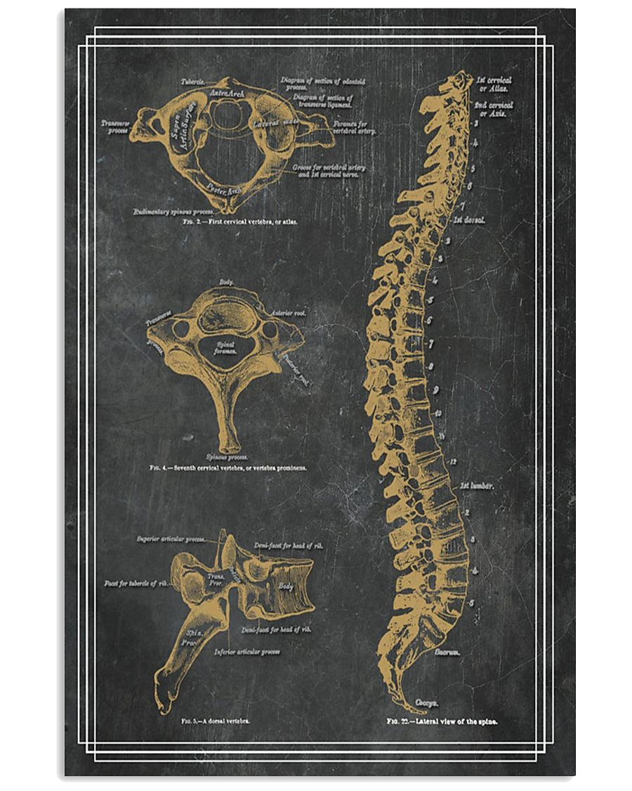 anatomy black board 7 11x17 Poster