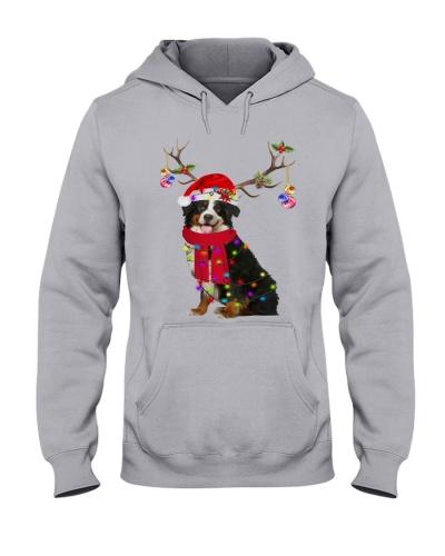 Cute Mountain Bernese Dog