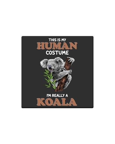 Human custome-Koala
