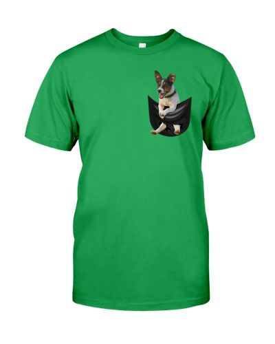 -Jack Russell Terrier in Pocket