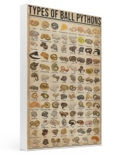 Types Of Ball Pythons 16x24 Gallery Wrapped Canvas Prints thumbnail