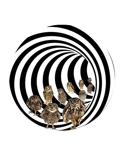 Eddy owl - HL