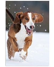 Beautiful Dog 11x17 Poster front