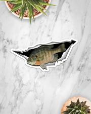 Bluegill Fish Sticker - Single (Horizontal) aos-sticker-single-horizontal-lifestyle-front-06