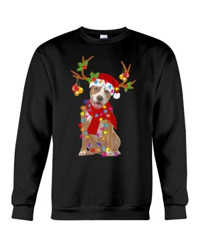Pitbull christmas is coming