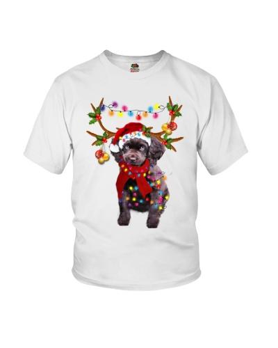 Boykin Spaniel gorgeous reindeer