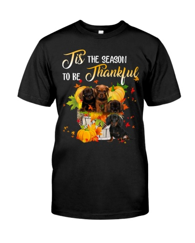 Dachshund the reason to be thanksful