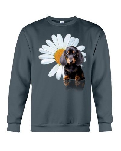 Dachshund and a daisy
