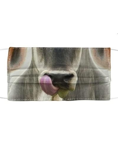 Th 9 Brahman cattle licks my nose