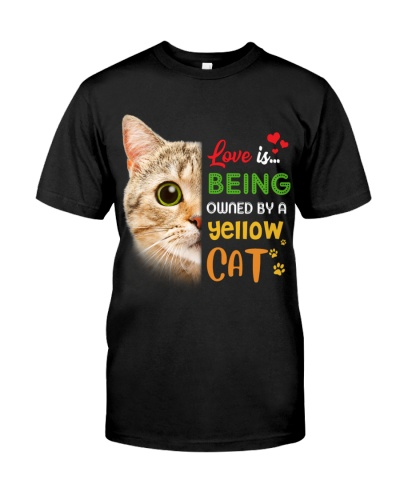 Love is being owned by a yellow Cat